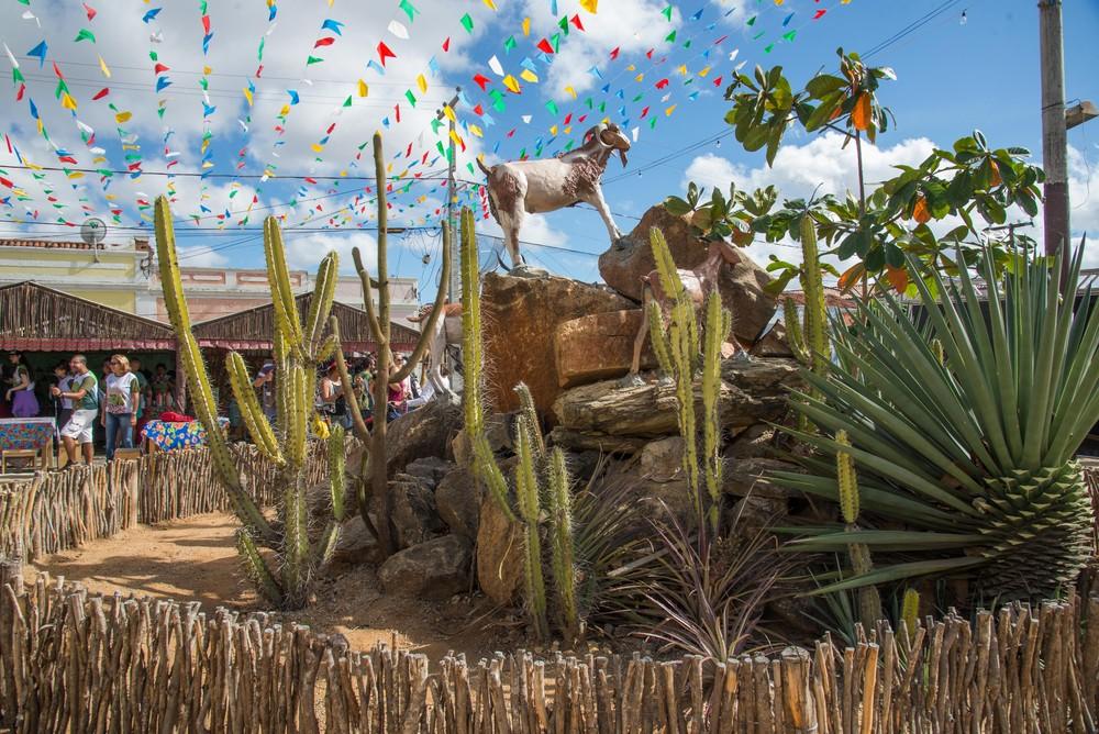 Em formato virtual, 22ª Festa do Bode Rei promove caprinocultura do Cariri